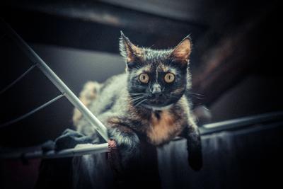 Shooting photo animaux -7 © Nicolas